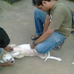 Caring Hands For Animals (CHFA) – Saving Animals in Hyderabad